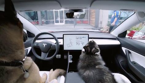 Tesla hundemodus