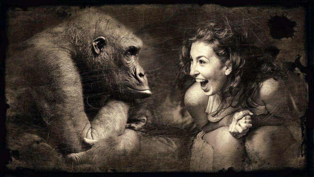 Gorilla følelser