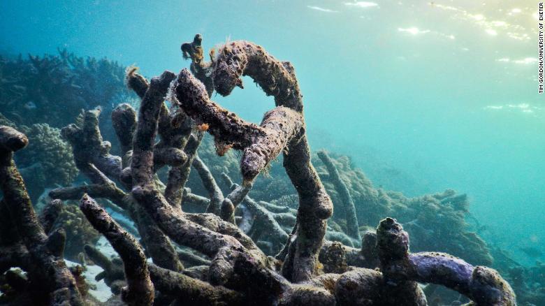 Great Barrier Reef død
