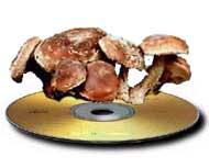 CD med sopp