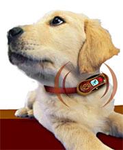 PetsCell hundemobil