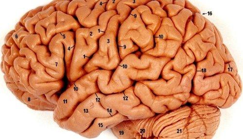 Den menneskelige hjerne er ingen vanlig PC...