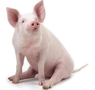 Automation Labs reklamerer med denne grisen på sitt nettsted. Den er neppe farlig...