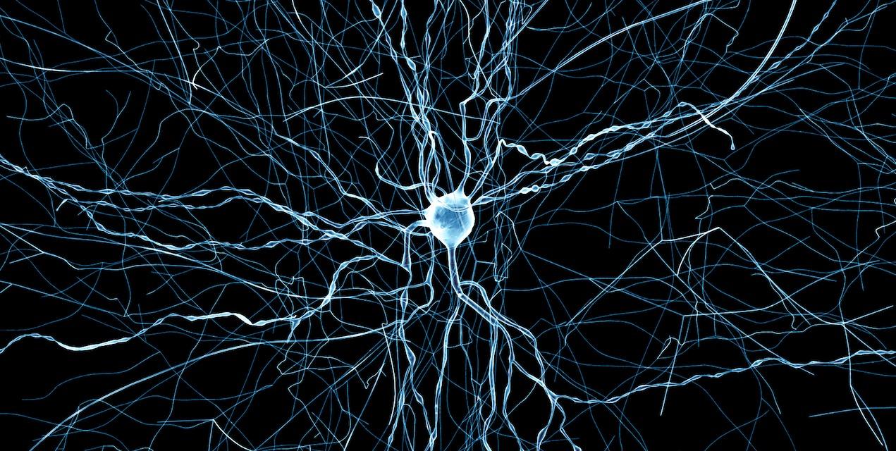Forskere har klart å gjenskape nevroner virtuelt.