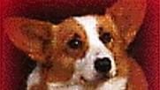 VOFF: Er de nå så søte? Kriminelle hunder stjeler mobiler i Kina.